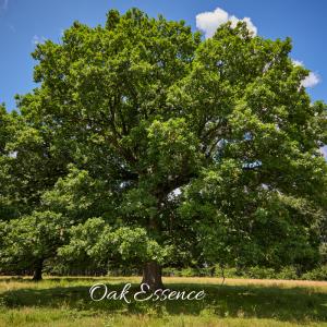 Oak Essence